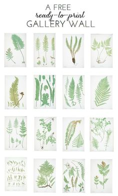 Ready-To-Print Gallery Wall: Fern Botanicals w/link to other free artwork Illustration Botanique, Botanical Illustration, Free Artwork, Free Prints, Botanical Prints, Botanical Gallery Wall, Ferns, Diy Art, Printable Wall Art