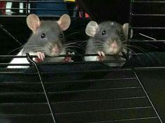 Looks like my babies Gus and Owen ❤️