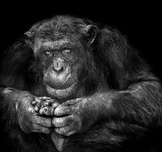 Planet of Apes by Pavel Glazkov on 500px