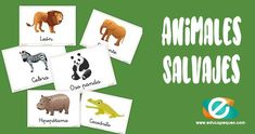 Animales salvajes Animal Cartoon Video, Funny Animal Videos, Animal Memes, Videos Funny, Humor Animal, Animals And Pets, Baby Animals, Funny Animals, Animal Paintings