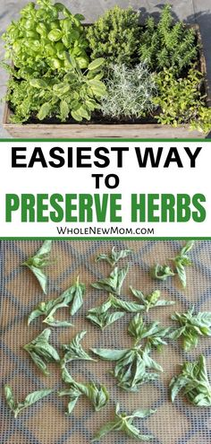 an overflow of herbs from your garden or CSA? This is the Easiest Way to Pre., Got an overflow of herbs from your garden or CSA? This is the Easiest Way to Pre., Got an overflow of herbs from your garden or CSA? This is the Easiest Way to Pre. Herbal Remedies, Natural Remedies, Preserve Herbs, Growing Herbs, Natural Living, Fresh Herbs, Preserves, Whole Food Recipes, Healthy Recipes