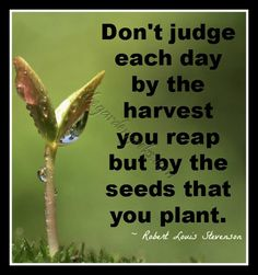 Stevensons Seeds | For more quotes, daily tips and plant information, join us on facebook https://www.facebook.com/thegardengeeks