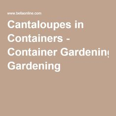 Cantaloupes in Containers - Container Gardening Growing Melons, Container Gardening, Shrubs, Cantaloupe, Backyard Ideas, Healthy, Shrub, Container Garden, Yard Crashers