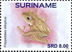 Stamp: Frogs (Suriname) (Frogs) Col:SR 2016-075