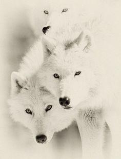 ANIMALES BLANCO....❤