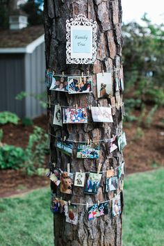 Make your outdoor wedding more intimate by hanging family photos around a tree! {Katie Nesbitt Photography}
