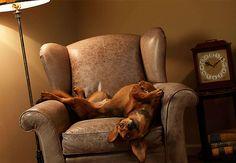 fotógrafa americana Lennette Newell  flagra cães e gatos em momentos inesperados e faz fotos incomuns dos bichinhos