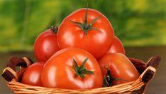 Урожай помидоров можно собирать в мае