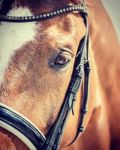 The softness of a horses eye is enough to warm even the coltesd of hearts. #love #trust #respect #beautiful #horse #lovehim #sweet #gelding #dressage #dressagehorse