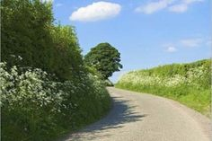 """Strange and wonderful Irish proverbs such as """"For every mile of road there's two miles of ditches""""..."""