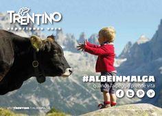 #ALBEINMALGA - quando l'alpeggio prende vita. Hashtag campaign by @Visit Trentino