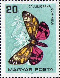 Hungary series: Butterflies (1966) Catalog codes: Stamp number HU1726  Michel HU2201ATags:AnimalsInsectsCaterpillarsIssued on:1966-02-01 Perforation:comb11 1/2 : 12  Face value: 20 Hungarian fillér