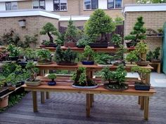 Bonsai Bench by Jeremy Norbury