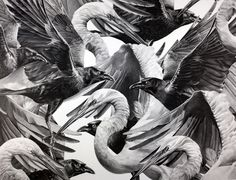 i1b85 Wax Pencil Bird Drawings by Christina Empedocles                                                                                                                                                                                 More