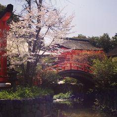 kyotokk: 下鴨神社 の 桜 # # 京都 桜 # 下 鸭 神社