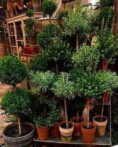 Antiques & Garden Show of Nashville - Quintessence Herb Garden Design, Diy Herb Garden, Cottage Garden Plants, Vegetable Garden Design, Small Garden Design, Garden Landscape Design, Cottage Gardens, Container Plants, Container Gardening