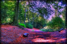 Wendover Woods by John Edward Michael in Halton Camp, England.