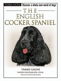 """Read """"The English Cocker Spaniel"""" by Tammy Gagne available from Rakuten Kobo. Discover a whole new world of dogs with these revolutionary, breed-specific guides. One of the most popular breeds in th. Clumber Spaniel, Cocker Spaniel Dog, English Cocker Spaniel, Spaniels, Working Cocker, Working Dogs, Sussex Spaniel, Irish Water Spaniel, Field Spaniel"""