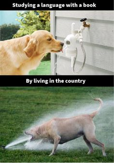 Studying A Language With A Book By Living In The Country - Funny Memes. The Funniest Memes worldwide for Birthdays, School, Cats, and Dank Memes - Meme Funny Shit, The Funny, Funny Jokes, Hilarious, Funny Animal Memes, Funny Animals, Cute Animals, Memes Humor, Lol Pics