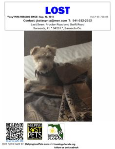 Lost Dog - Wire Fox Terrier - Sarasota, FL, United States
