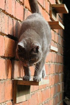 Cat stairs- can't wait to own a home so i can do things like this