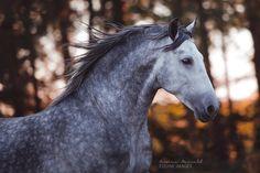 Equine Photo Workshop Traventhal 2015 – Carina Maiwald – EQUINE IMAGES