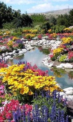 Color vs monochromatic palettes   Flower Stream colorful nature flowers river stream