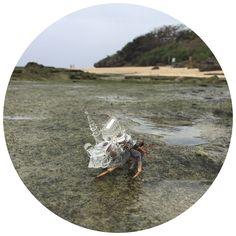 Aki Inomata crab environment as oriental wedding chapels