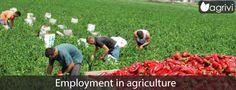 Employment in agriculture   Agrivi #farming #agritech #farmer