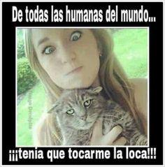 Humor(es) #10690668