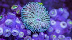 An Extraordinary Macro Timelapse of Aquatic Wildlife by Sandro Bocci