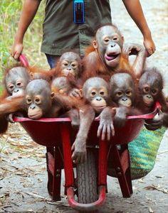 Barrel full of monkeys!