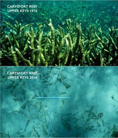 WASHINGTON (AP) — Seawater — increasingly acidic due to global warming — is eating away the limestone framework for the coral reef of the upper Florida Keys, according to a new study. It's something that scientists…