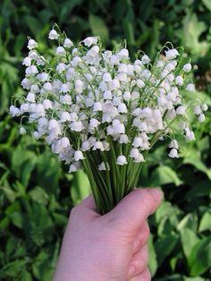 Person holding bunch of Lily of The Valley flowers