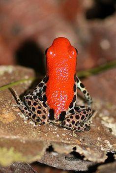 La théorie du tout: Caméléon, serpent, grenouilles et le rouge (5 phot...