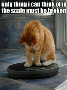 Cat Humor ~