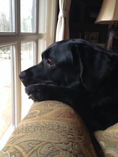 Sometimes, I just want to look at all the others wonderful creations of God. Then, I want a treat.