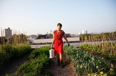 Annie Novak at Eagle Street on The Selby  A rooftop garden in New York