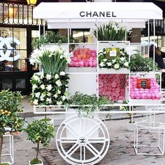 Good morning!! It's a glorious #spring #monday in #Perth. ☀️ #Sunshine aplenty, perfect to wander around in the city. Come visit, open all day. #shoplocal #perthisok #perthboutique #inspiration #flowers #chanel #waboutique #mountlawley