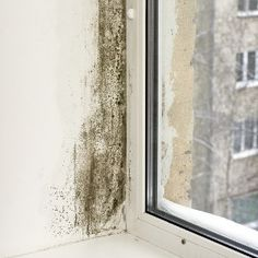 Who Can You Sue If Your House Is Full of Mold? #toxic #mold,black #mold,real #estate,insurance #law,featured,personal # # #home #safety,personal #injury http://entertainment.nef2.com/who-can-you-sue-if-your-house-is-full-of-mold-toxic-moldblack-moldreal-estateinsurance-lawfeaturedpersonal-home-safetypersonal-injury/  # Who Can You Sue If Your House Is Full of Mold? It starts with some stray coughs, or little black spots on the wall. Next thing you know you re in the hospital with a lung…