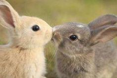 Bunnies like Eskimo Kisses, too!