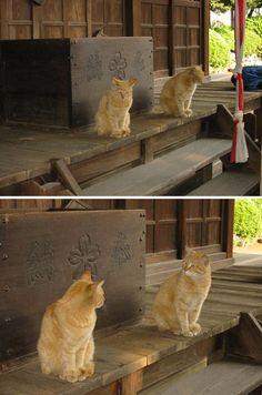 狛猫として二匹で賽銭箱を守っています。