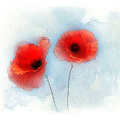Poppy_Illustration.png (700×700)