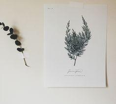 juniper   a daily something: Free Printable   Botanical Prints 02