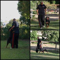 Multi V1 Ciana Von Heidelberg | BET Rottweilers ...