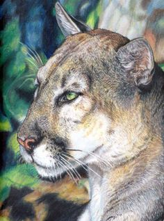 """Savage Calm, 8"""" x 10"""" hand signed matted print of the original Prisma Colored Pencil. Printed on acid free, archival papers. Matted in white and ready for a 11"""" x 14"""" frame. Protected by a clear acid free bag and shipped flat, Etsy, $19.00"""