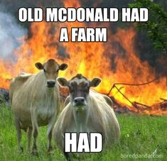 Funny Animal Memes, Funny Animal Pictures, Funny Photos, Funny Animals, Funny Memes, Meme Pics, Farm Animals, Funny Sayings, Cow Pictures