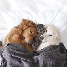 Dogs + Cat - a love affair