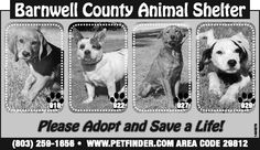 Barnwell County Animal Shelter ad | September 25, 2013 | The People-Sentinel