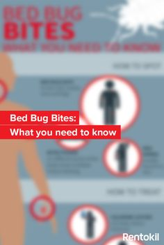 how to get bed bugs out your shoes